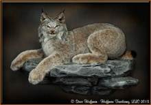 Alaskan Lynx Taxidermy Wall Mount
