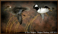Hooded Merganser Pair Flying Taxidermy Mount